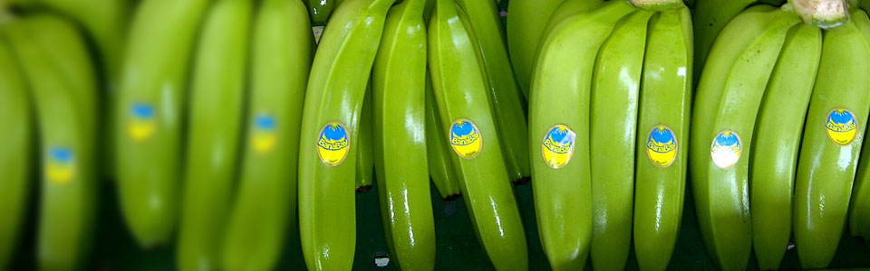 Our Products - BanaBay - Banana Import Export